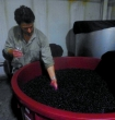 Will taking a sample of grapes to taste