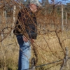 Philippe inspecting the grafted vines